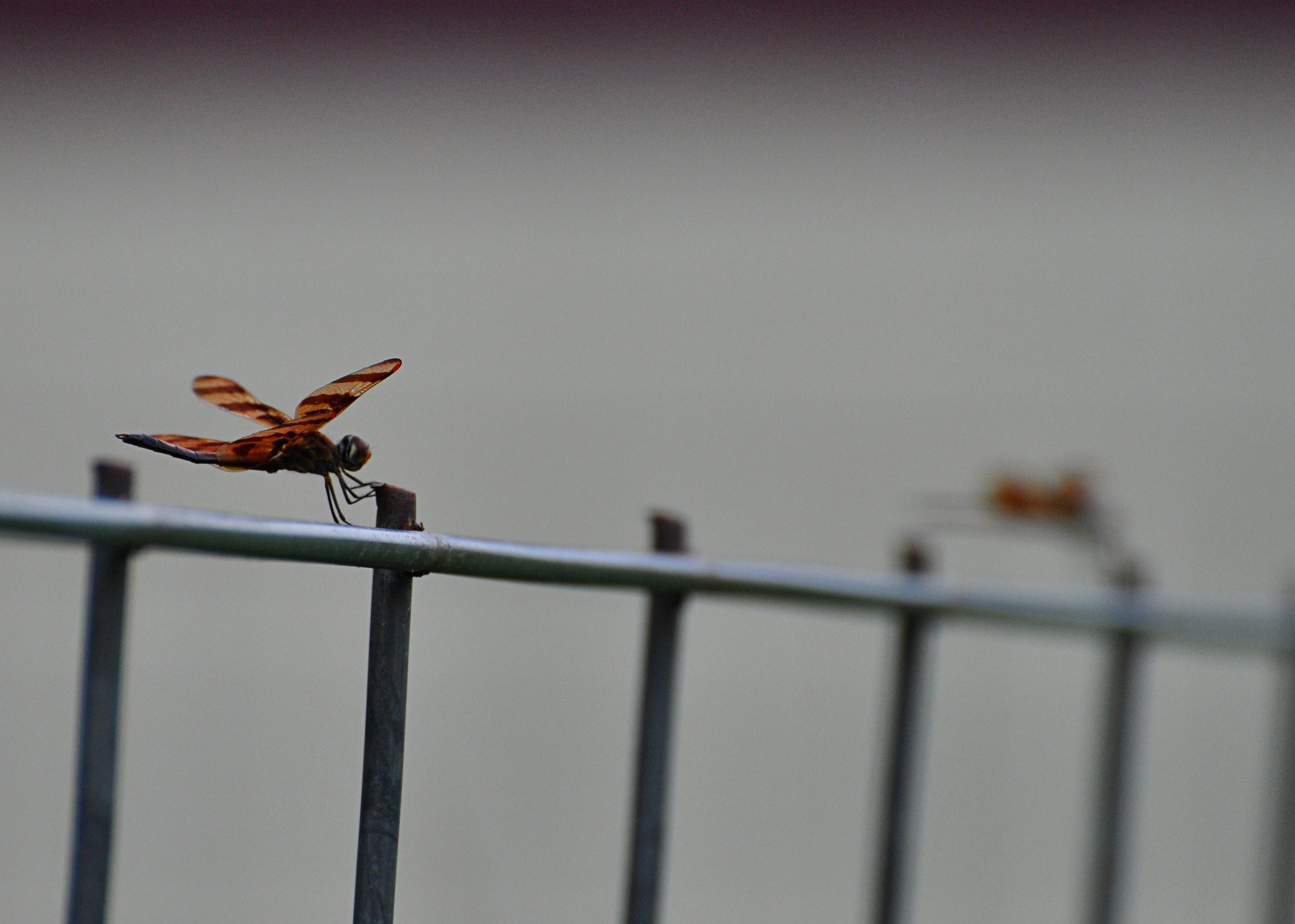 I Love Flying Bugs   My Little Piece of Heaven
